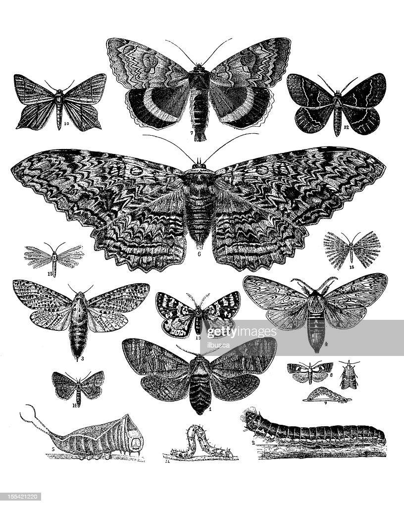 collection of butterflies moths and caterpillars stock