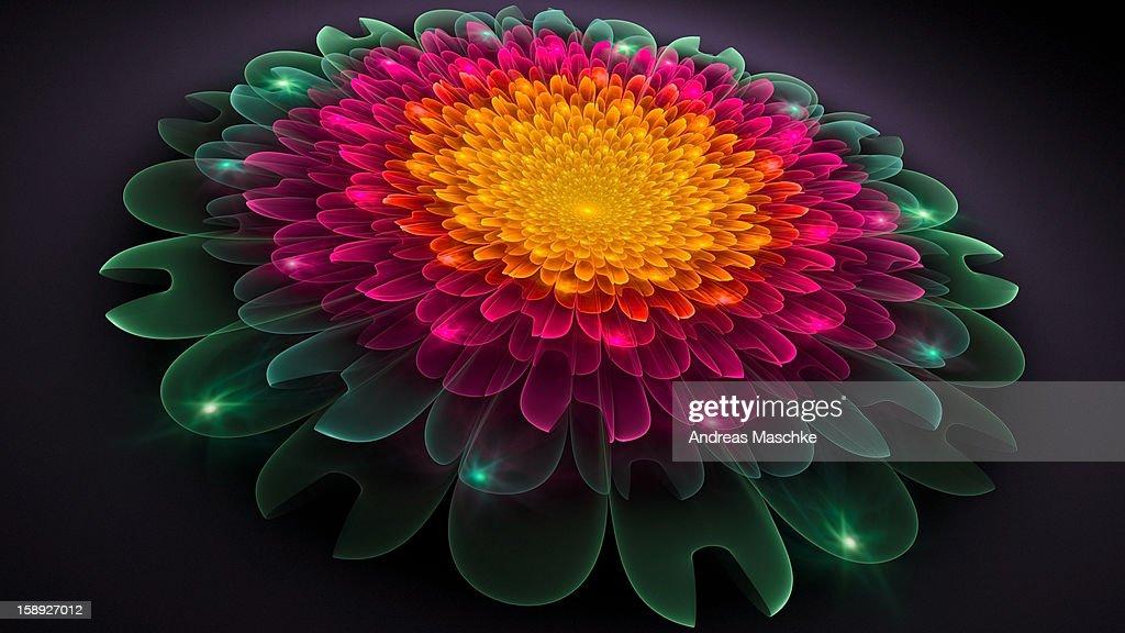 Colorful flower : Stock Illustration