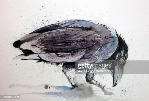Cornacchia - crow : Stock Illustration