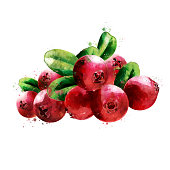 Cranberry, isolated hand-painted illustration on a white background