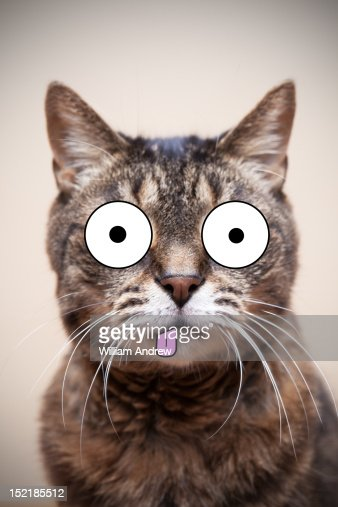 Crazy cat with illustrated face : Stock Illustration