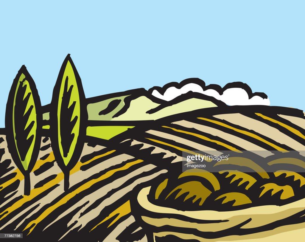 crop field : Vector Art