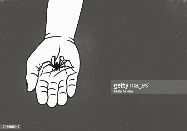 Cropped image of man holding spider against gray background