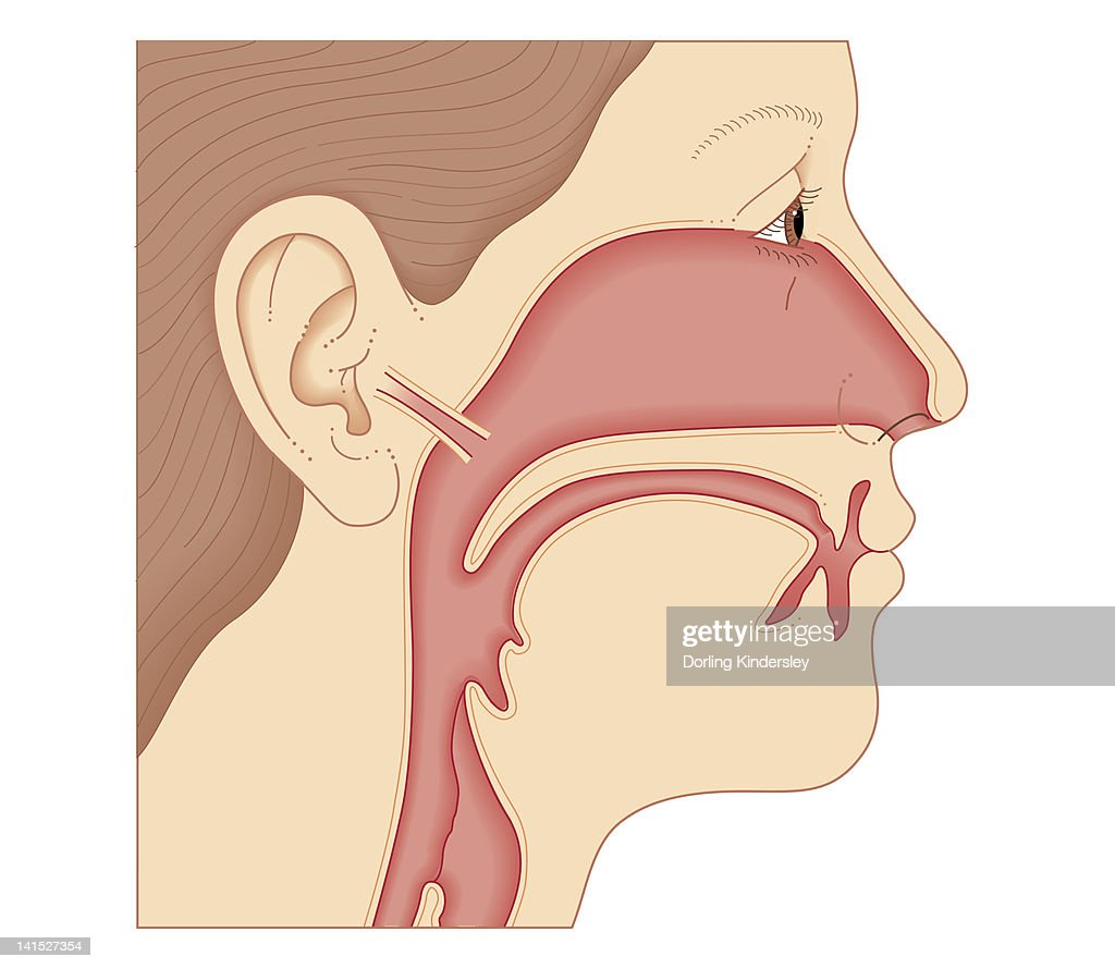 Adult ear nose and throat reserve