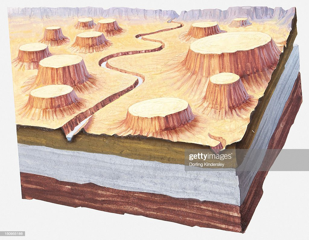 Cross-section illustration of Grand Canyon landscape a million of years ago : Stock Illustration