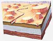 Cross-section illustration of Grand Canyon landscape a million of years ago