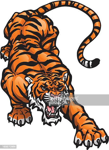 Tiger Vector Art And Graphics Getty Images