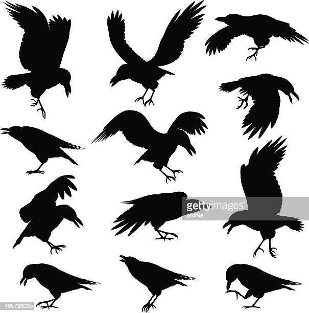 Halloween Crows