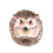 Hedgehog. Cartoon watercolor illustration