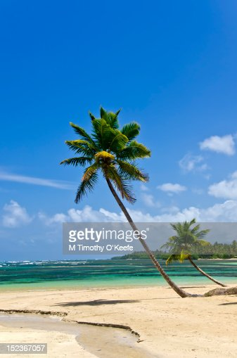 Deserted beach with bent palms : Stock Illustration