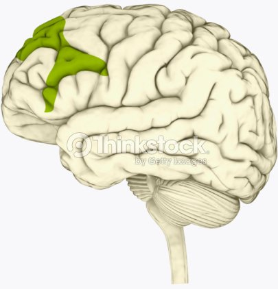 Digital Illustration Of Lateral Prefrontal Cortex Involved In ...