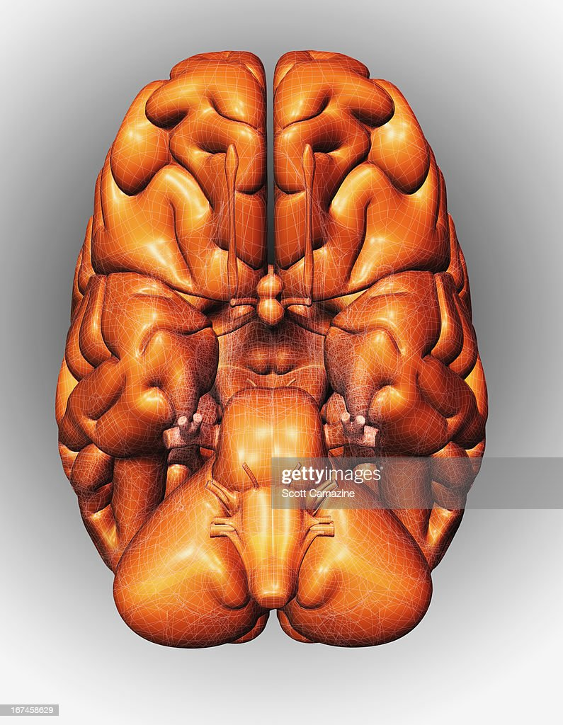 Digitally generated image of brain : Stock Illustration