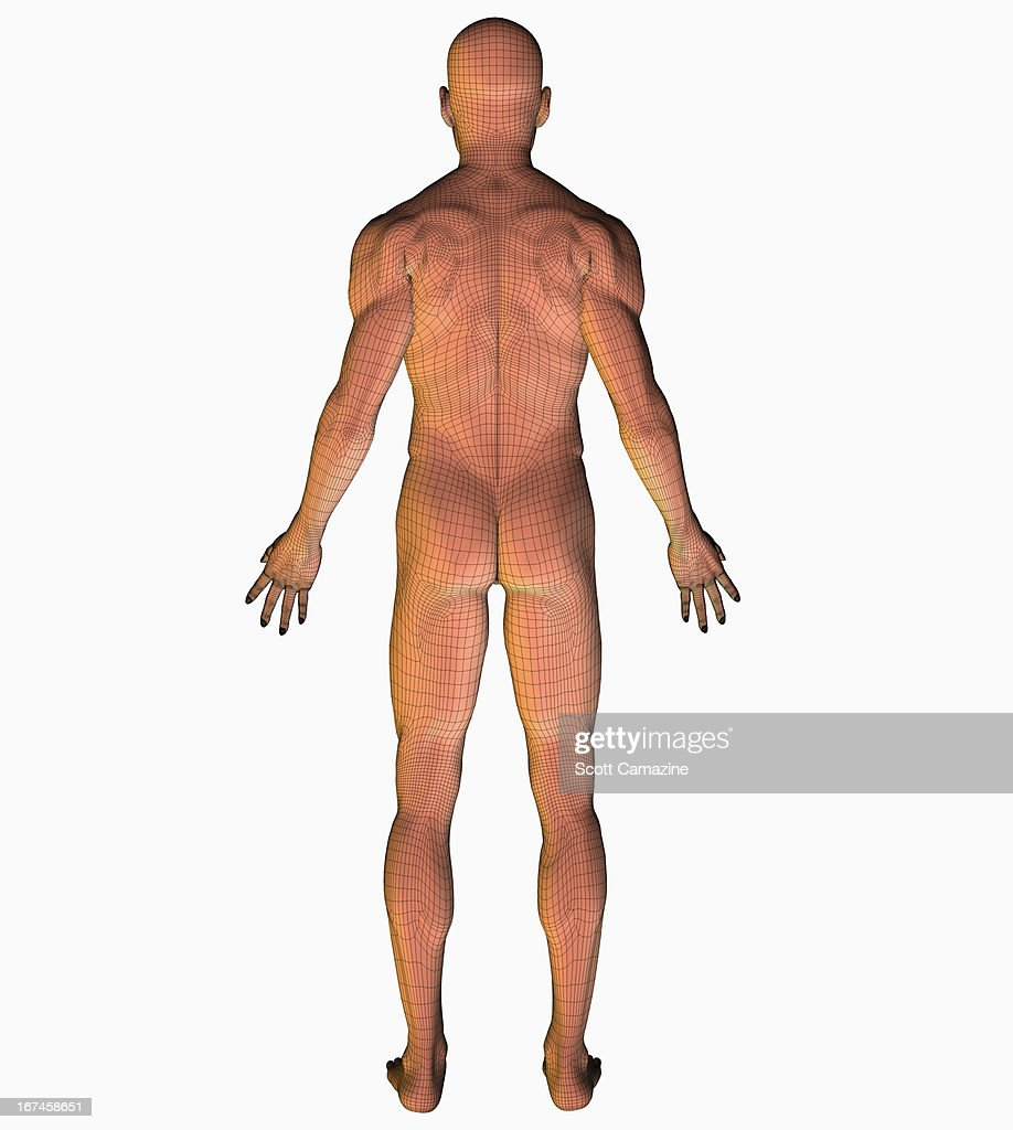 Digitally generated image of human representation : Stock Illustration