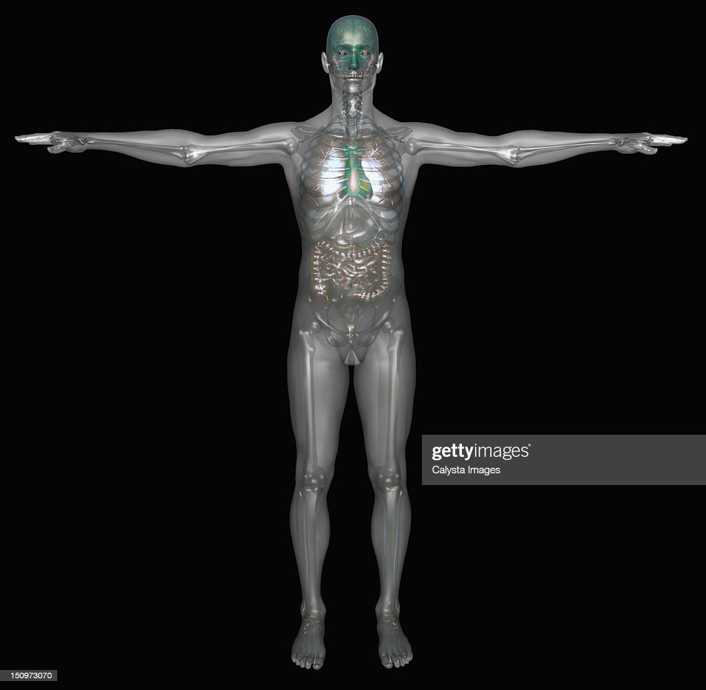 Digitally generated image of standing human representation with inner human organs visible : Stock Illustration