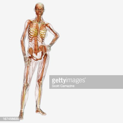 Digitally generated image of standing male likeness : Stock Illustration