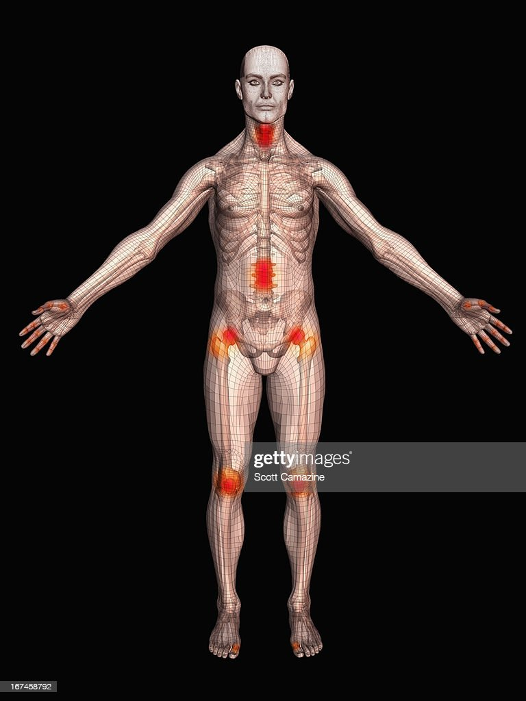 Digitally generated male figure showing body parts : Stock Illustration
