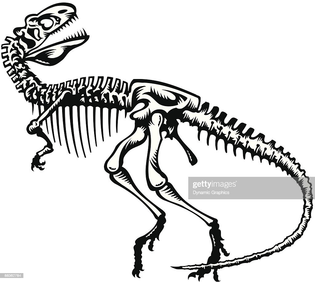dinosaur skeleton coloring pages - dinosaur skeleton also available in color 043c9803 vector