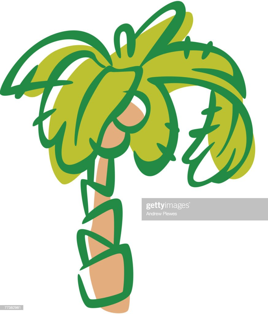 Drawing of a coconut tree : Vector Art