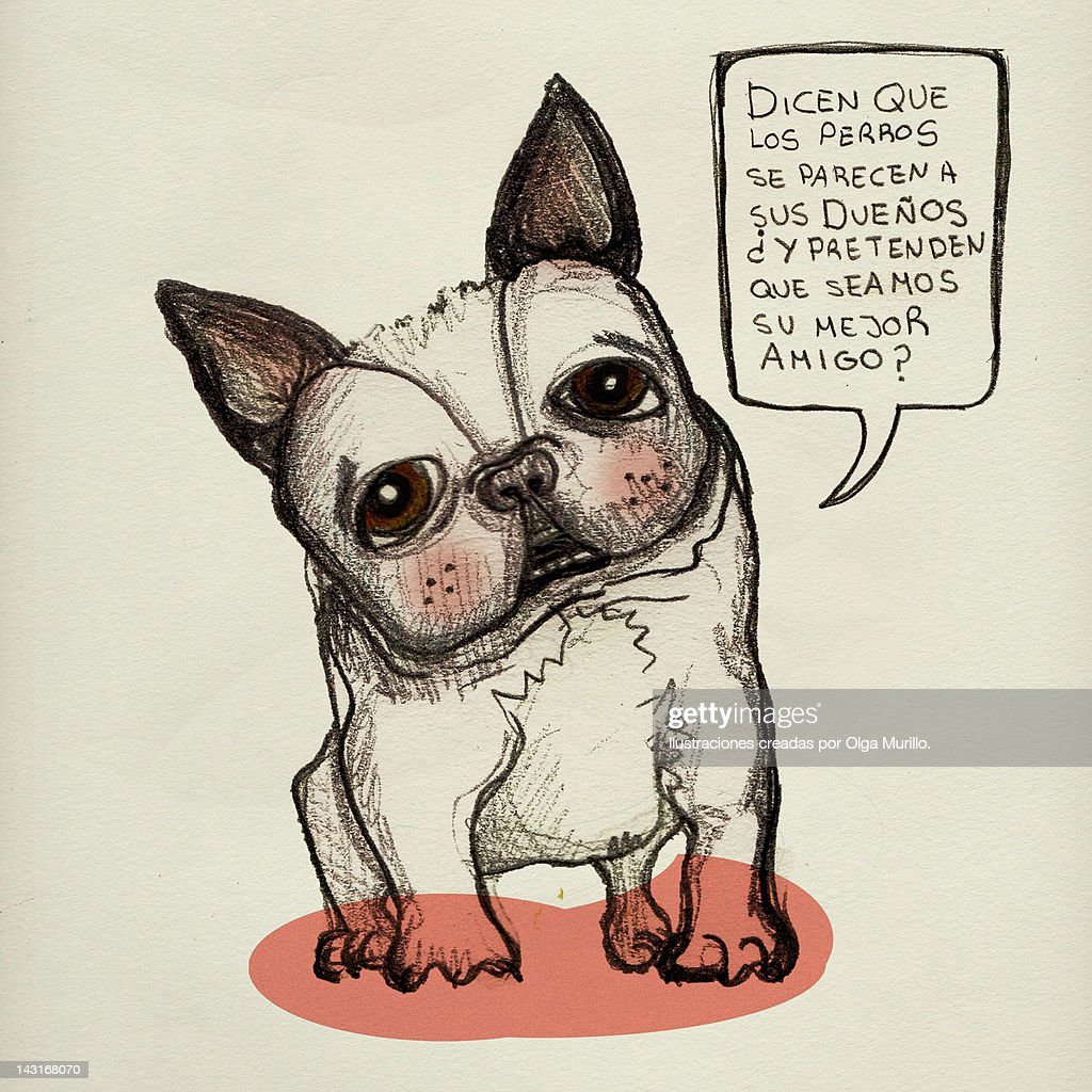 Drawing of Dog : Stock Illustration
