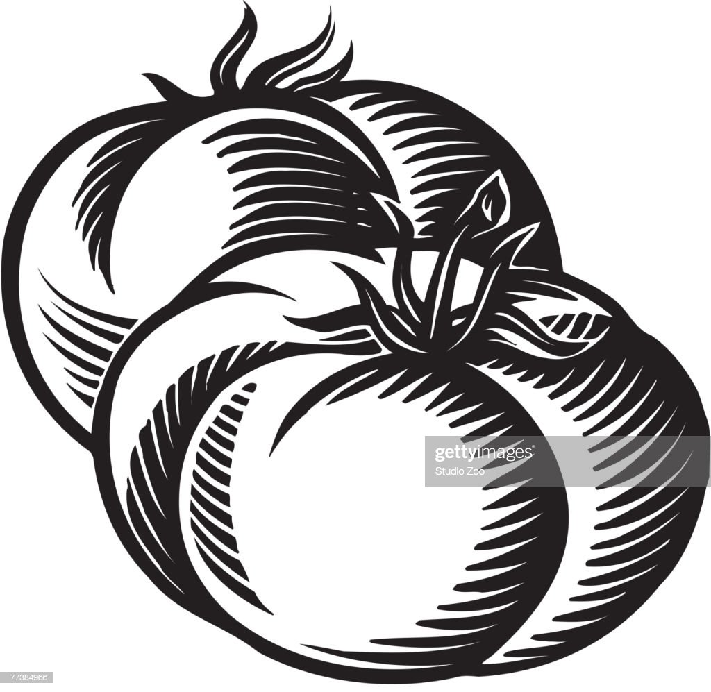 A drawing of two plump tomatoes in black and white : Vector Art