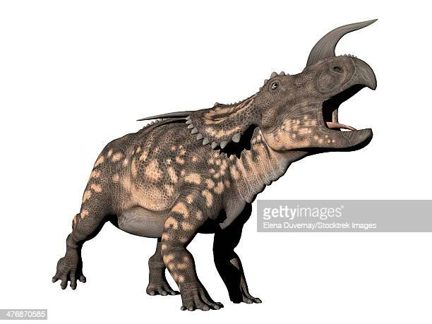 Einiosaurus dinosaur, white background.