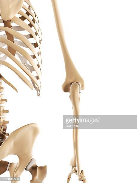 Elbow bones, artwork