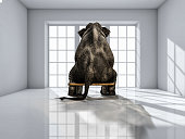 lonely elephant sitting in the room for commercials