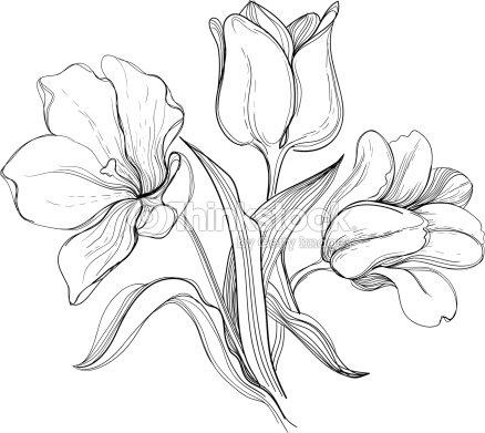 engraved bush tulips vector art