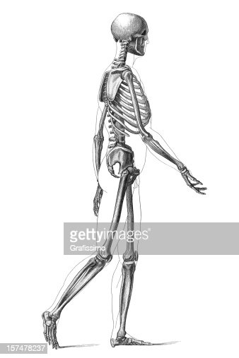 engraving human skeleton walking 1881 stock illustration | getty, Skeleton