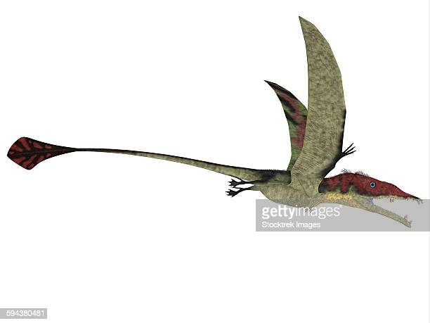 Eudimorphodon is a predatory flying reptile that lived during the Triassic period of Italy.