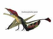 The carnivorous Eudimorphodon was a pterosaur flying reptile that lived in Italy in the Triassic Period.