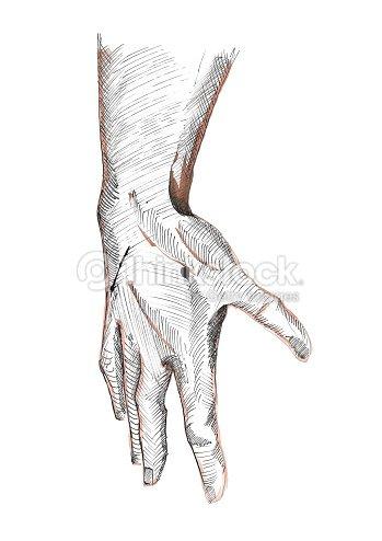 Ausdrucksvolle Rechten Menschliche Hand Skizze Knöchel Finger ...