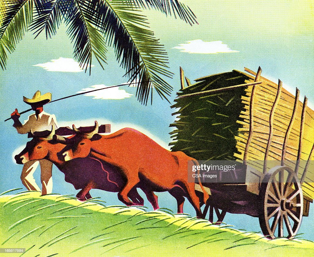 Farmer and Cattle Pulling a Cart : Stock Illustration