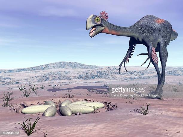 Female Gigantoraptor dinosaur walking to its nest full of eggs in the desert.