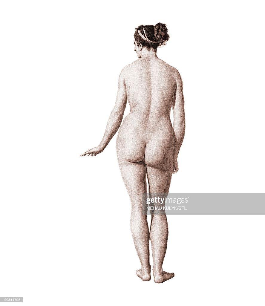 Female nude, artwork : Stock Illustration