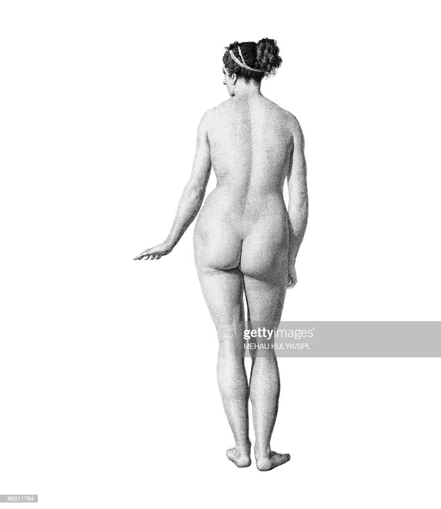 Female nude, artwork : Stock Illustration