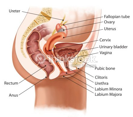 you tube female clitoris