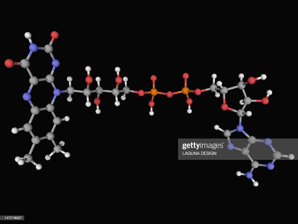 Flavin adenine dinucleotide (FAD) molecule : Stock Illustration