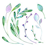 Floral elements paint with watercolors