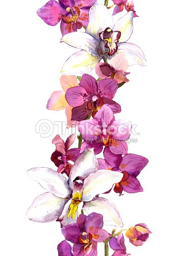 Floral Seamless Frame Border With Bright Exotic Flowers Orchid ...