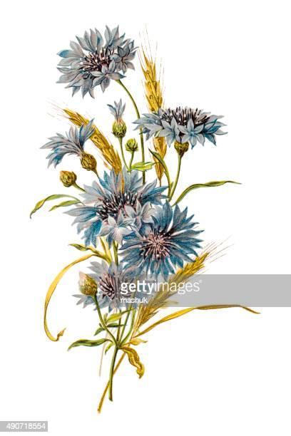 Flower composition 19 century illustration