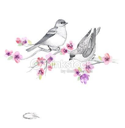 Fiori e uccelli illustrazione stock thinkstock for Disegni di fiori a matita