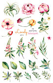 Foral collection with flower,peonies,leaves,branches,lupins,air plant,field bindweed,strawberry and more.Colorful collection with 24 watercolor elements.Set of floral elements.Lovely Bouquet collectio