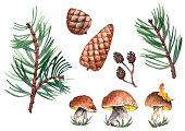 Forest set with pine branches, cones and cep mushrooms. Watercolor on white background. Isolated elements for design.
