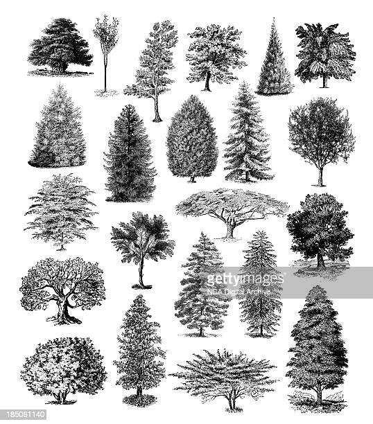 Forest Tree Illustrations | Vintage Nature Clipart
