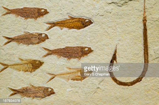 Fossil fish going after fossil fish hook : Stock Illustration