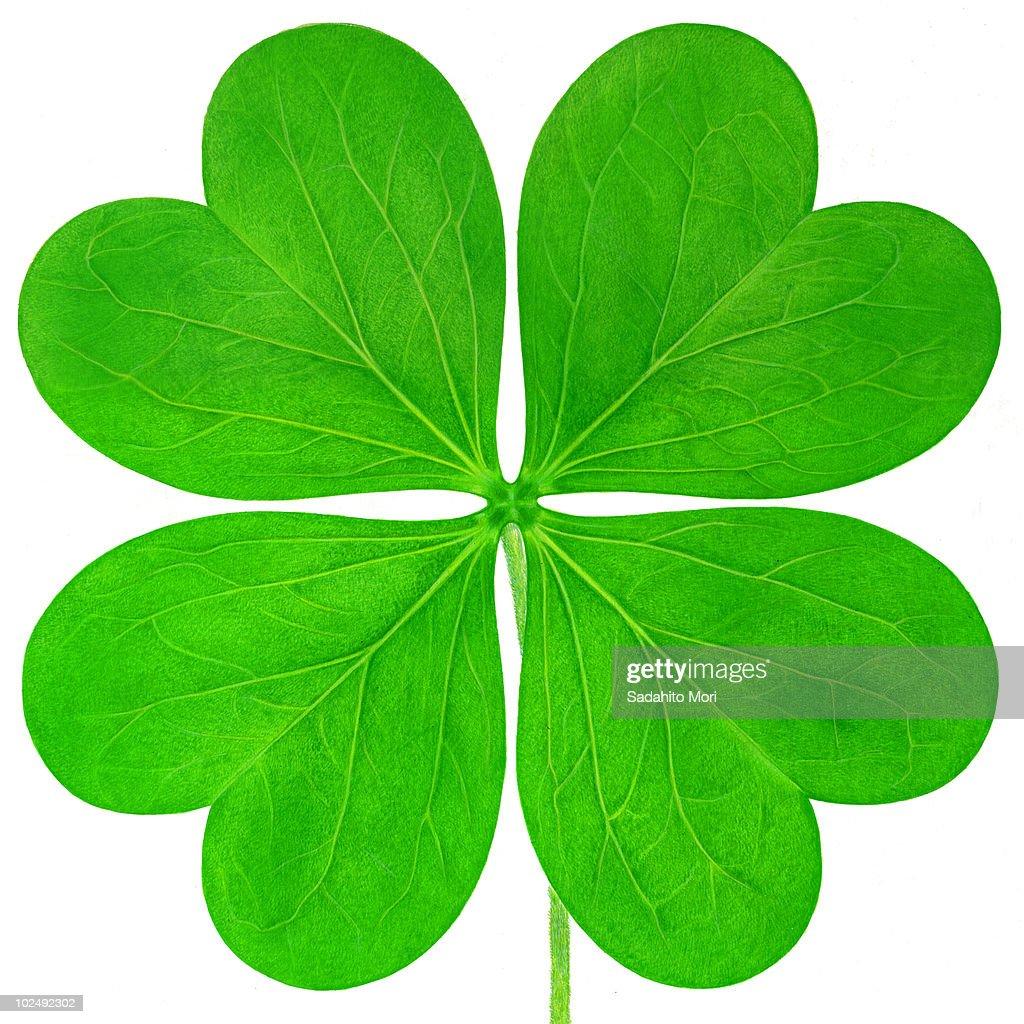 four leaf clover against white background stock illustration