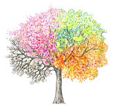 Four seasons.  Tree handdrawing isolated on white. Winter, spring, summer, autumn.