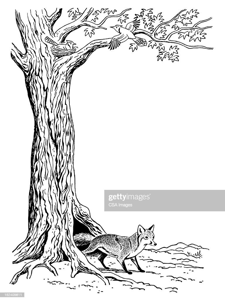 Fox And Tree : Stock Illustration