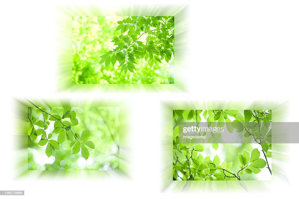Fresh and green leaves : Stock Illustration